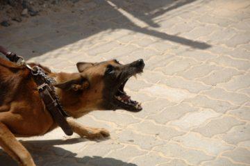 dog-bites